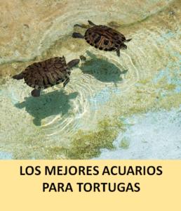 Los Mejores Acuarios Para Tortugas Laspecerascom