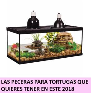 Es Momento De Que Conozcas Las Mejores Peceras Para Tortugas De Este