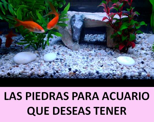 piedras para acuario