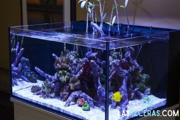 Hermoso manglar en un acuario marino  o de agua salada