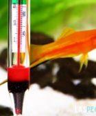 temperatura y peces tropicales